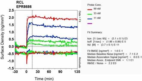 OI-RD Scanning - Anti-RCL antibody [EPR8686] (ab131252)