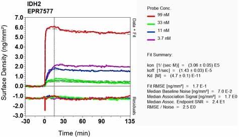 OI-RD Scanning - Anti-IDH2 antibody [EPR7577] (ab131263)