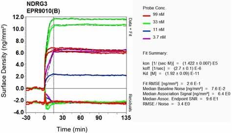 OI-RD Scanning - Anti-NDRG3 antibody [EPR9010(B)] (ab131266)