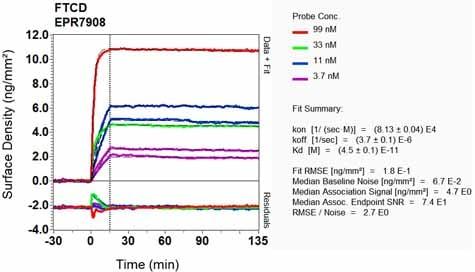 Other - Anti-58K Golgi protein antibody [EPR7908] (ab131275)