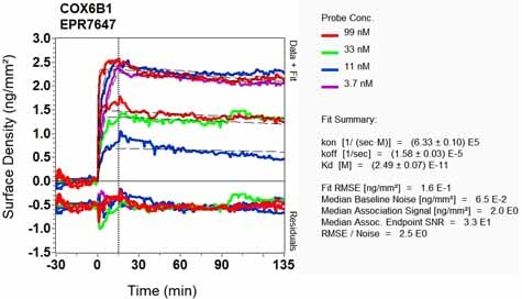 OI-RD Scanning - Anti-COX6B1 antibody [EPR7647] (ab131277)