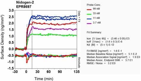Other - Anti-Nidogen 2/NID-2 antibody [EPR8697] (ab131279)