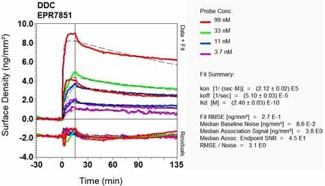 Other - Anti-DOPA Decarboxylase/DDC antibody [EPR7851] (ab131282)