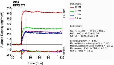 OI-RD Scanning - Anti-AK3L1 antibody [EPR7678] (ab131327)