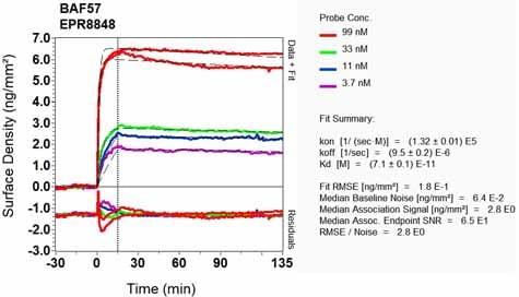 Other - Anti-BAF57/SMARCE1 antibody [EPR8848] - ChIP Grade (ab131328)