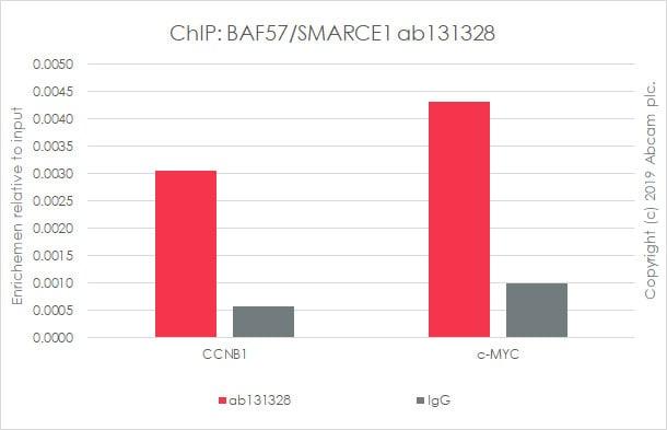 ChIP - Anti-BAF57/SMARCE1 antibody [EPR8848] - ChIP Grade (ab131328)