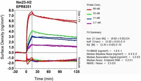 Other - Anti-NME2 antibody [EPR8351] (ab131329)