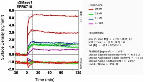 OI-RD Scanning - Anti-nSMase antibody [EPR6718] (ab131330)