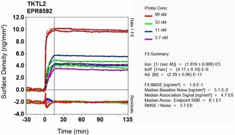 OI-RD Scanning - Anti-TKTL2 antibody [EPR8592] (ab131331)