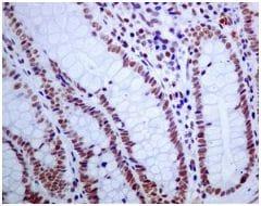 Immunohistochemistry (Formalin/PFA-fixed paraffin-embedded sections) - Anti-USP39 antibody [EPR8684] (ab131332)