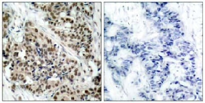 Immunohistochemistry (Formalin/PFA-fixed paraffin-embedded sections) - Anti-FOXO1A (phospho S256) antibody (ab131339)