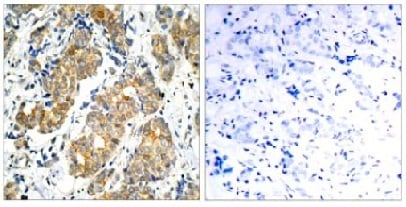 Immunohistochemistry (Formalin/PFA-fixed paraffin-embedded sections) - Anti-GSK3 alpha antibody (ab131344)