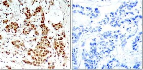 Immunohistochemistry (Formalin/PFA-fixed paraffin-embedded sections) - Anti-RSK1 p90 (phospho T348) antibody (ab131350)