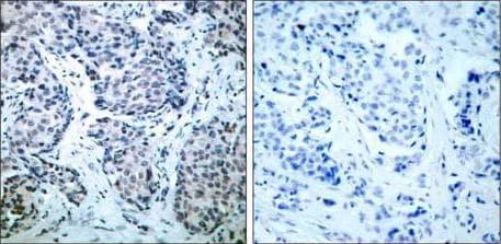 Immunohistochemistry (Formalin/PFA-fixed paraffin-embedded sections) - Anti-MEK4/MKK4 (phospho T261) antibody (ab131351)