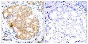 Immunohistochemistry (Formalin/PFA-fixed paraffin-embedded sections) - Anti-GSK3 beta antibody (ab131356)