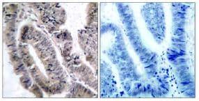 Immunohistochemistry (Formalin/PFA-fixed paraffin-embedded sections) - Anti-AMPK alpha 1 (phospho S487) antibody (ab131357)