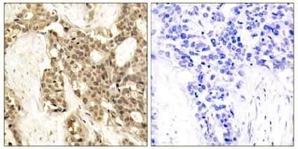 Immunohistochemistry (Formalin/PFA-fixed paraffin-embedded sections) - Anti-ERK1 (phospho Y204) antibody (ab131438)