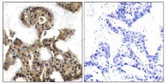 Immunohistochemistry (Formalin/PFA-fixed paraffin-embedded sections) - Anti-eIF4EBP1 antibody (ab131453)