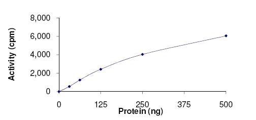 Functional Studies - Recombinant human FASTK protein (ab131693)