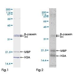 Functional Studies - Recombinant human TAK1 protein (ab132950)