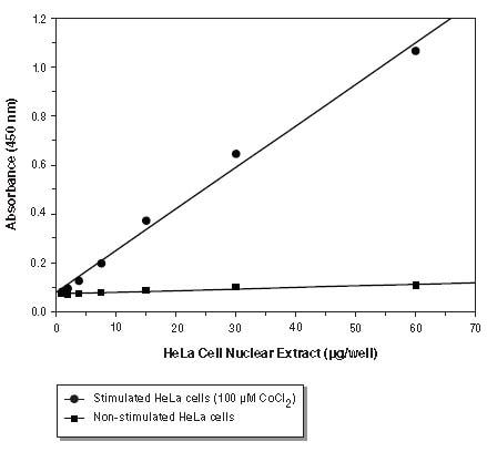 Functional Studies - HIF-1 alpha Transcription Factor Assay Kit (ab133104)