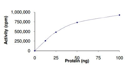 Functional Studies - Recombinant human DYRK2 protein (ab133138)