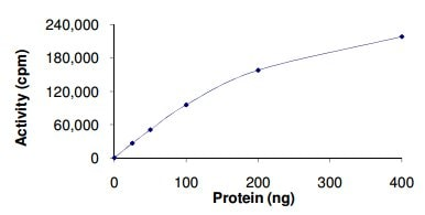 Functional Studies - Recombinant human NEK1 protein (ab133146)