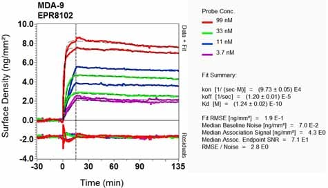 OI-RD Scanning - Anti-Syntenin antibody [EPR8102] (ab133267)