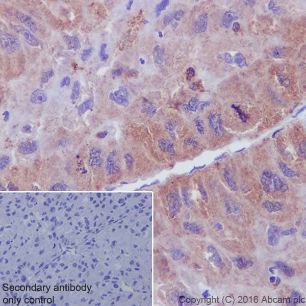 Immunohistochemistry (Formalin/PFA-fixed paraffin-embedded sections) - Anti-Syntenin antibody [EPR8102] (ab133267)