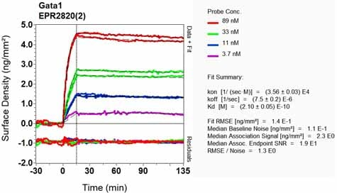 OI-RD Scanning - Anti-GATA1 antibody [EPR2820(2)] (ab133274)