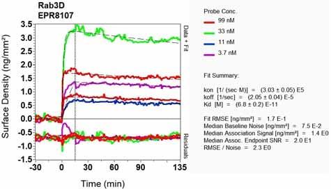 Other - Anti-Rab3D antibody [EPR8107] (ab133301)