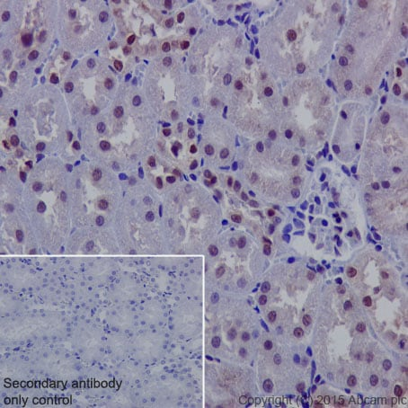 Immunohistochemistry (Formalin/PFA-fixed paraffin-embedded sections) - Anti-NADPH oxidase 4 antibody [UOTR1B493] (ab133303)