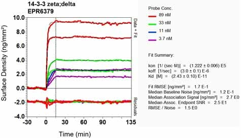OI-RD Scanning - Anti-14-3-3 antibody [EPR6379] (ab133323)