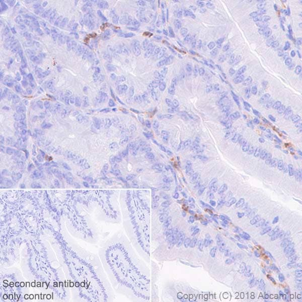 Immunohistochemistry (Formalin/PFA-fixed paraffin-embedded sections) - Anti-CD11b antibody [EPR1344] (ab133357)