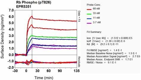 Other - Anti-Rb (phospho T826) antibody [EPR5351] (ab133446)