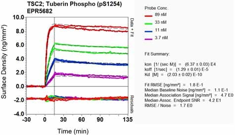 Other - Anti-Tuberin (phospho S1254) antibody [EPR5682] (ab133454)