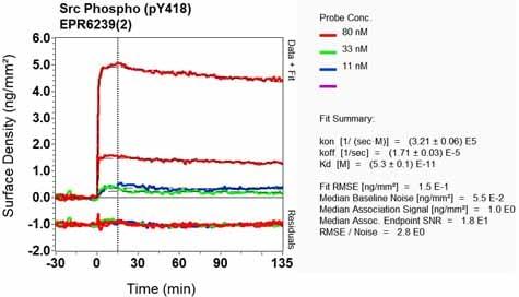 Other - Anti-Src (phospho Y418) antibody [EPR6239(2)] (ab133460)