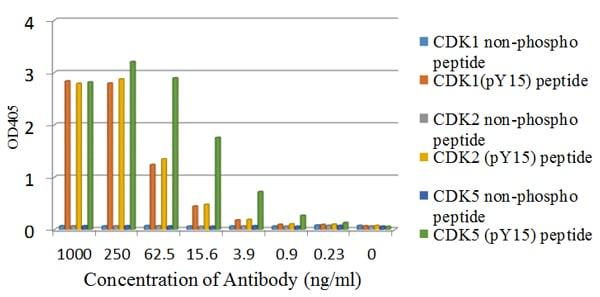 ELISA - Anti-CDK1+CDK2+CDK3+CDK5 (phospho Y15) antibody [EPR7875] (ab133463)