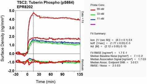 Other - Anti-Tuberin (phospho S664) antibody [EPR8202] (ab133465)