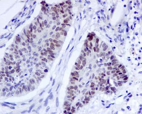 Immunohistochemistry (Formalin/PFA-fixed paraffin-embedded sections) - Anti-EHMT2/G9A antibody [EPR4019(2)] (ab133482)