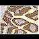 Immunohistochemistry (Formalin/PFA-fixed paraffin-embedded sections) - Anti-Cytokeratin 19 antibody [EPNCIR127B] (ab133496)