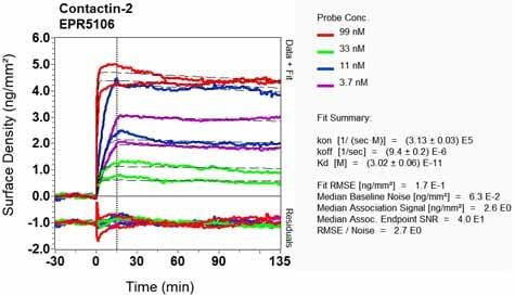 OI-RD Scanning - Anti-TAG1/TAX1 antibody [EPR5106] (ab133498)