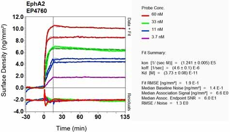 Other - Anti-Eph receptor A2 antibody [EP4760] (ab133501)