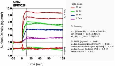 Other - Anti-Chk2 antibody [EPR5528] (ab133505)