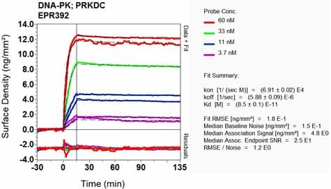 Other - Anti-DNA PKcs antibody [EPR392] (ab133516)