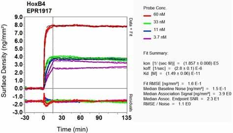 Other - Anti-HOXB4 antibody [EPR1917] (ab133521)