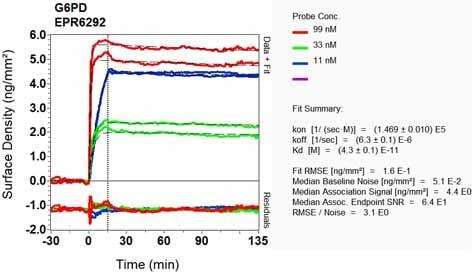 OI-RD Scanning - Anti-Glucose 6 Phosphate Dehydrogenase antibody [EPR6292] (ab133525)