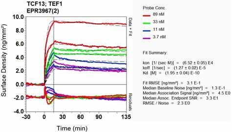 Other - Anti-TEF1/TEAD-1 antibody [EPR3967(2)] (ab133533)