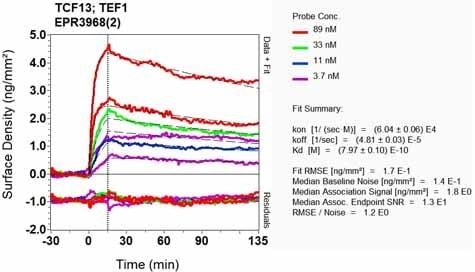 Other - Anti-TEF1/TEAD-1 antibody [EPR3968(2)] (ab133535)
