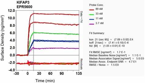 OI-RD Scanning - Anti-KIFAP3 antibody [EPR5600] (ab133537)